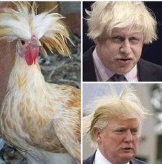 The chicken clearly looks better … Memes Humor, Funny Jokes, Hilarious, Ecards Humor, Funny Gifs, Donald Trumph, Donald Trump Funny, Christian Humor, How To Speak Spanish