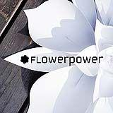 Flower power to papierowe instalacje florystyczne. kontakt do zamówień indywidualnych: flowerpower.pracownia@gmail.com