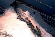 Did Japan's Whale Hunt Just Get Harpooned? | TakePart