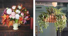 SOLABEE FLOWERS & BOTANICALS // PORTLAND, OR Fall Floral Arrangements, Portland, Centerpieces, Plants, Decor, Flowers, Decoration, Center Pieces, Plant