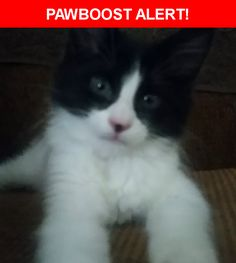 Please spread the word! Samson was last seen in Albuquerque, NM 87121.  Description: Blk/White ,Kitten, Fluffy, 3-4 months , answers to Samson and Itty Bitty Kitty, lots of white whiskers, nurses on blankets  Nearest Address: 10905 Cartagena Avenue Southwest, Albuquerque, NM, United States