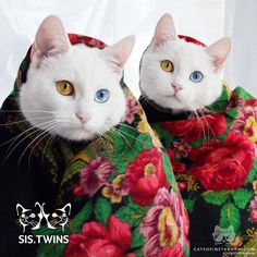 """Kitty Photo From @sis.twins: """"From Russia with Love ❤New friends are very welcome!"""""""