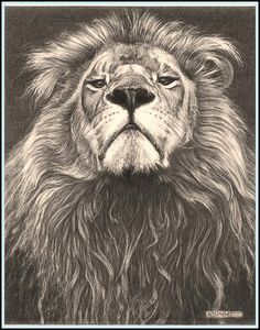 "'Head of the Family' - Lion - Fine Art Pencil Drawings by kjhayler, via Flickr~~~~""A very superior lion looking down his nose.I saw this one in the lion park near Harare in Zimbabwe, not wild but in Africa at least. He struck this pose when he heard the roar of another lion in the background. This is a very strong image, Ive noticed that my customers often buy this one for thier Dads."""
