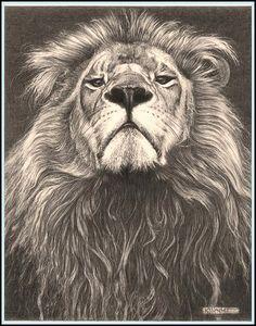'Head of the Family' - Lion - Fine Art Pencil Drawings by kjhayler, via Flickr