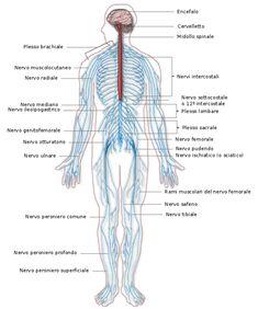 chi è il neurologo? è un medico specializzato in neurologia.  Si occupa delle malattie del Sistema Nervoso, ad esempio: ictus, sclerosi multipla, morbo di Parkinson, malattie neuromuscolari, epilessie, diagnostica di tumori e malattie cerebrovascolari. Vuoi saperne di più? clicca sull'immagine e informati su Spazio Psicologia www.spazio-psicologia.com