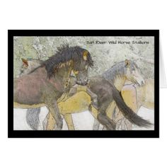 Salt River Wild Horse Stallions Greeting Card - photo gifts cyo photos personalize