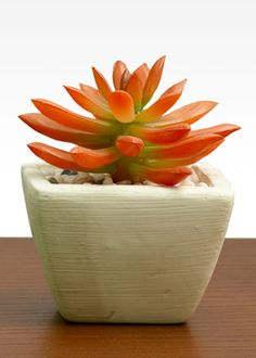 Faux red and green hued succulent in white pot - Modern Red Succulents, Artificial Succulents, Succulent Gardening, Planting Succulents, Succulent Plants, Coral Home Decor, White Pot, Outside Decorations, Floral Supplies
