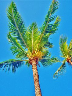 Palm trees bring to mind characters that are tall and lean and walk with a graceful swagger.