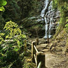 Tijuca Forest, Rio de Janeiro