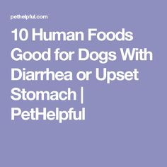 10 Human Foods Good for Dogs With Diarrhea or Upset Stomach | PetHelpful