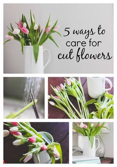 5 ways to care for your cut flowers to make them last longer! www.thedempsterlogbook.com