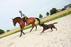 Horse and Dog Trail: Training für Hund und Pferd bei cavallo.de -  5-Stufen-Training für Pferd und Hund