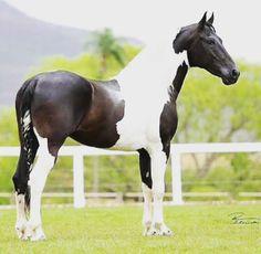 Futuro da casa nova Beautiful Creatures, Animals Beautiful, Dream Stables, Most Beautiful Horses, Gods Glory, Zebras, Horse Riding, Mammals, Equestrian