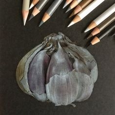 Чеснок Garlic Иллюстрация цветными карандашами на черной бумаге Colored pencils illustration on black paper botanical illustration ботаническая иллюстрация