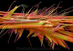 Caffeine crystals under an electron microscope - one of the finalists in the Wellcome Image Award.  So this explains why we stay awake!