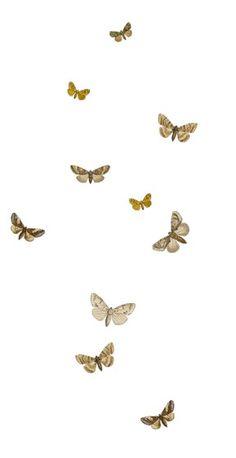 67 Best Butterflies Images On Pinterest