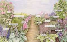 garden design ' concept illustration - Google Search