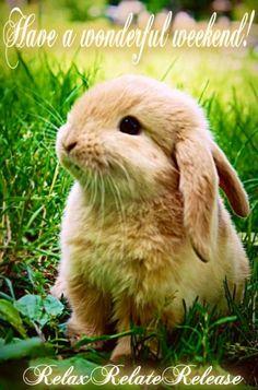 Have a wonderful weekend! Cute bunny via www.Facebook.com/RelaxRelateRelease