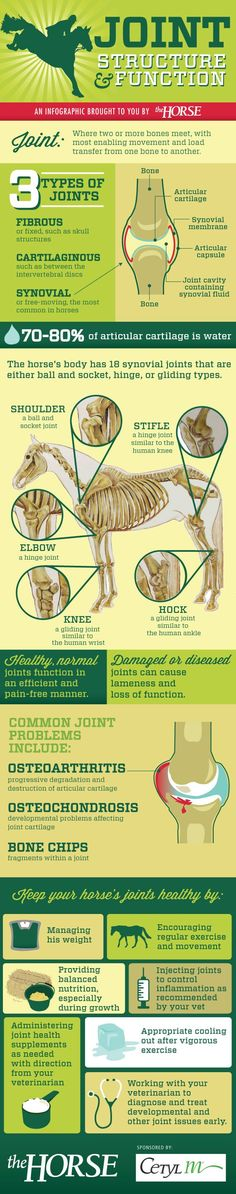 [INFOGRAPHIC] Learn about how horse joints work and how you can keep your horse's joints healthy with this step-by-step visual guide, brought to you by http://TheHorse.com and @Response Products . #ho (Vet Tech Thoughts)