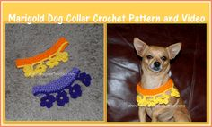 Posh Pooch Designs Dog Clothes: Marigold Dog Collar Crochet Pattern and Video | Posh Pooch Designs