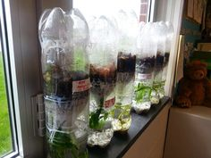 Biome BOttles...awesome third grade teaching about ecosystems!