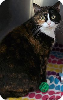 03/09/17 SL~~~Pictures of Vivian a Calico for adoption in St Louis, MO who needs a loving home. First pinned 8mo. ago