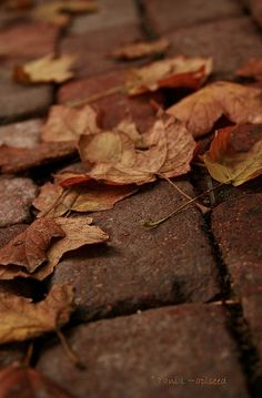 Brown Autumn Leaves by Tani L~aplseed Brown Aesthetic, Autumn Aesthetic, Aesthetic Themes, Autumn Day, Autumn Leaves, Late Autumn, Earth Tones, Chocolate Brown, My Favorite Color