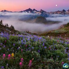Mount Rainier National Park, Washington by Miles Morgan Nature Aesthetic, Mount Rainier National Park, Montana, Beautiful Pictures, Cool Photos, Amazing Photos, Garden Of Eden, National Parks, Mother Nature