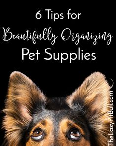 6 Tips for Beautifully Organizing Pet Supplies…