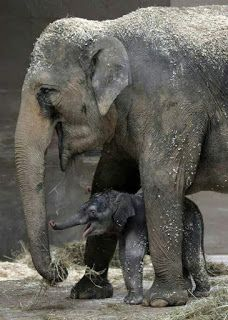 Mama feeding baby