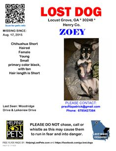 Lost Dog - Chihuahua Short Haired - Locust Grove, GA, United States