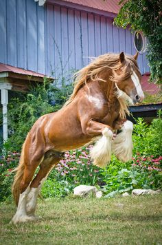 Beautiful horse rearing and jumping up. Pretty little flower bed in the background, too!