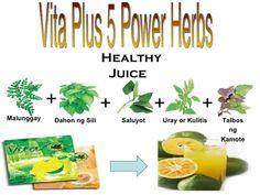 First Vita Plus | The FENIX FILES Natural Flavors, Marketing Plan, Business Marketing, Natural Wonders, Natural Health, Juice, Herbs, Drinks, Moringa Oleifera