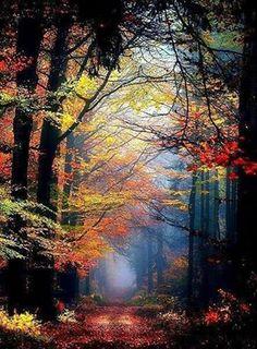 """Dᴏɴ & # ᴛ."", Renamonkalou: Secret Places … – Miracles from Nature Beautiful World, Beautiful Places, Beautiful Pictures, Beautiful Forest, Beautiful Scenery, Landscape Photography, Nature Photography, Photography Tips, Adventure Photography"