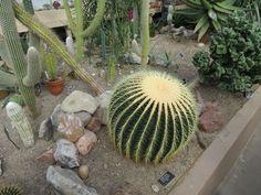 Botanical Gardens- Cactus House Pt 2 - 9