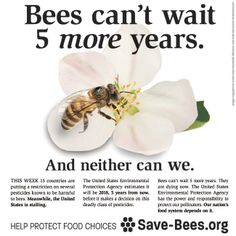 HELP SAVE OUR BEES~ Join us in calling on your Representative to take action to protect pollinators! Contact Congress and the EPA