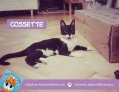 Ex Panda, ahora Cosstte... para ustedes... una gata hermosa que conquistó el corazón de Katrina de un ronroneo. Juguetona, ronronera, mimosa... y ahora tiene hogar. Qué felicidad! Gracias Katrina por adoptarla!