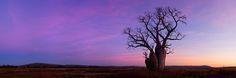 The Lone Boab » Beau Mitchell - Australian Landscape Photography