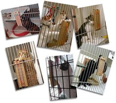 One really great product I've been meaning to share with you for a while now is Stretch and Scratch. These simple little cardboard scratchers are designed to meet the needs of cats and kittens staying temporarily in caged environments. The Stretch and Scratch cardboard cat scratcher is just the right size to fit in the cage, plus it's sturdy, easy to install, and most importantly, it's affordable.