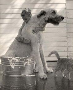 Irish Wolfhound, girl, child, kid, bath, store vaskedag, large laundry day, haha, furry, friendship, love, photo b/w.