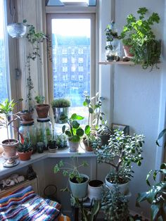 Houseplants for the dreary winter months. This is what my windowsills look like … Houseplants for the dreary winter months. This is what my windowsills [. Indoor Plants, Decor, Inspiration, Room Inspiration, Home And Garden, Interior, Indoor Gardens, Indoor Garden, Home Decor