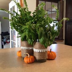 Fall decorations, basil, twine, mason jar centerpiece