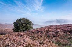 Góry, Mgła, Drzewo, Wrzos, Jesień