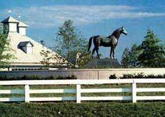 Kentucky Horse Park.  Lexington, Kentucky.  (1995)