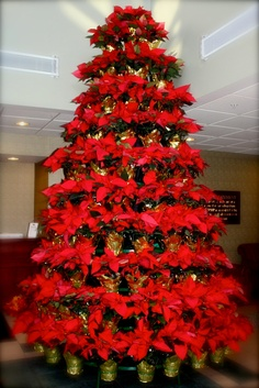 "Beautiful poinsettia holiday ""tree""."