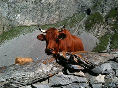 La Tarine. #vanoise #tarentaise #alpes #montagne #mountain #refuge le repoju #pralognan