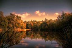 Forest pond by Watze D. de Haan