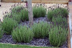 Slate, Slate Garden, Front Garden, Lavender, Garden, Plants
