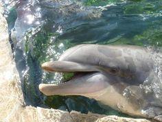 Seaworld Orlando is worth it just to see this  #seaworld #internationaldrive #orlando