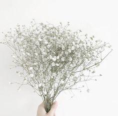 alimastudies — // pics for your bujo flower power Aesthetic Colors, Flower Aesthetic, White Aesthetic, Aesthetic Vintage, Aesthetic Pictures, Babys Breath Flowers, Photo Images, Anime Art Girl, Flower Wallpaper